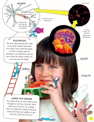 Human Body - The Little Brainwaves Investigate